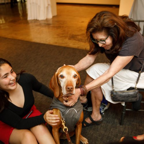 Another guide dog present for the Gala, with Jason Romero's daughter Sofia and another attendee - who might be the dog's owner - showing the dog some affection.